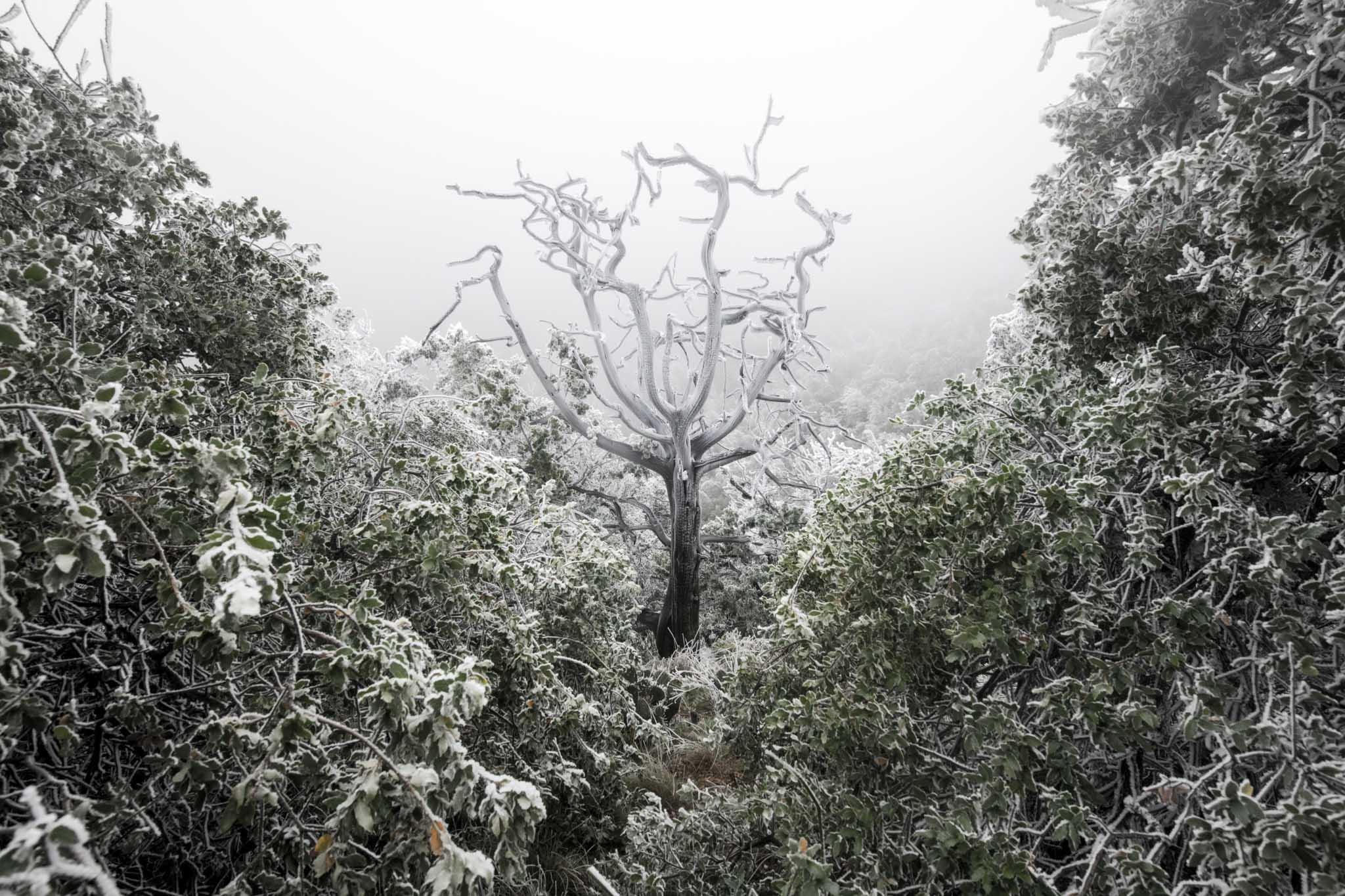 Fotografía de paisaje: vegetacion congelada en las montañas Chisos, Big Bend National Park texas. Obra del artista Pablo Fregoso